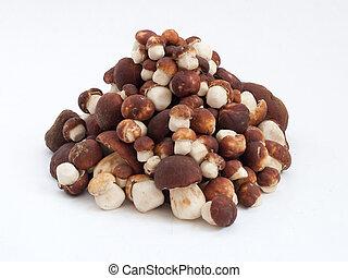 mucchio, di, funghi, cepe, bianco, fondo