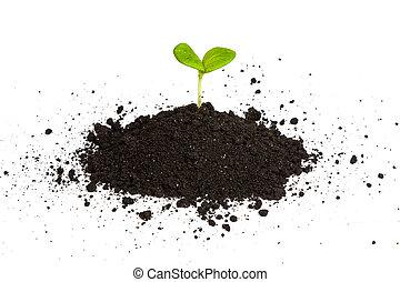 mucchio, sporcizia, con, uno, pianta verde, germoglio, isolato