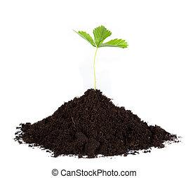 mucchio, sporcizia, con, uno, pianta verde