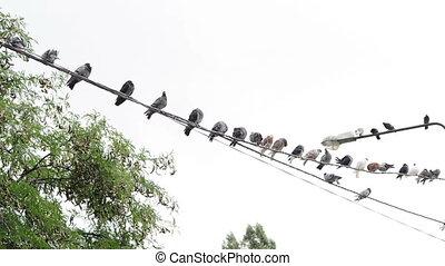 Much birds on a wire