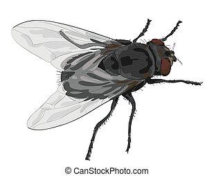 mucha, tło., owad, biały, odizolowany