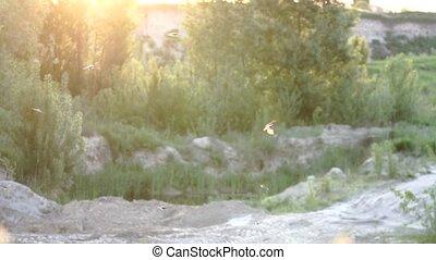 mucha, złoty, klapa, ptaszki, ich, powoli, świt, skrzydełka