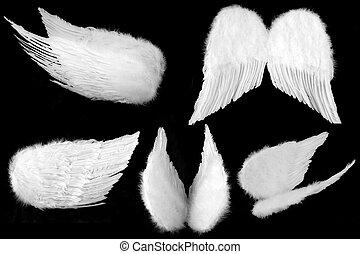 muchos, ángulos, de, angel de la guarda, alas, aislado, en, negro