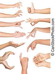 muchos, diferente, conjunto, gesto, manos