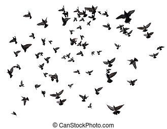 muchos, vuelo, cielo, aves