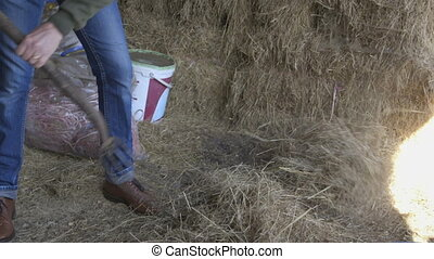 Mucking out the stables - Mature man shovelling straw in a...