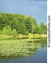 Mud Lake in Northwoods Wisconsin
