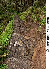 muddy eroded trail, Oregon