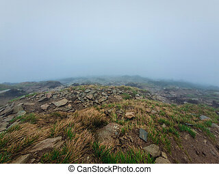 Gloomy foggy landscape with low visibility on the horizon.