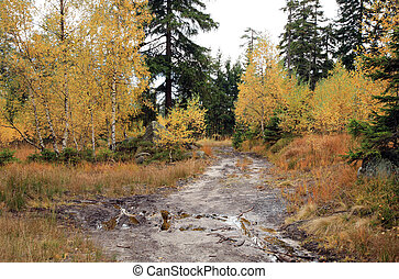 Muddy way in the autumn