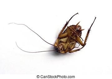 muerto, cucaracha