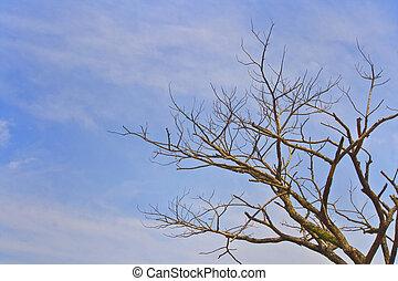 muerto, sequía, árbol