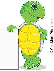 muestra en blanco, tortuga