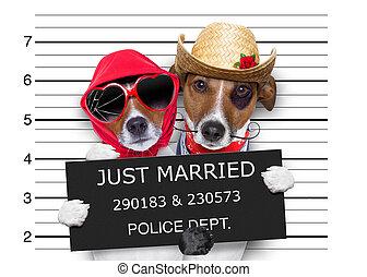 mugshot, apenas casado, perros