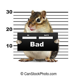 mugshot background with rodent, bad animal concept