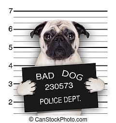 mugshot dog - funny cute pug holding a placard while a...