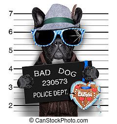 mugshot dog - mugshot bavarian dog with a police banner