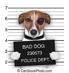 mugshot dog  - mugshot of  wanted dog holding a banner