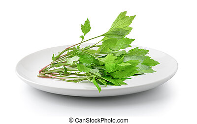 mugwort in plate isolated on a white background