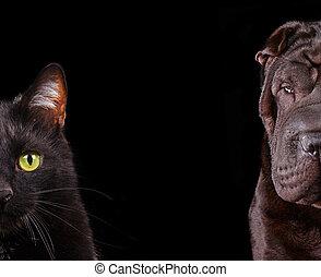 muilkorf, portretten, dog, -, op, kat, helft, afsluiten