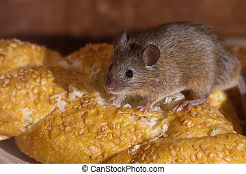 muis, in de keuken