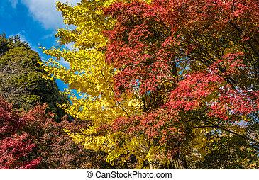 muito, foco raso, multicolored, outono sai