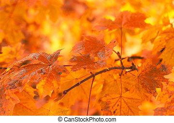 muito, folhas, foco raso, outono, fundo, laranja