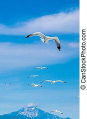 muitos, gaivotas, voando, junto, após, um, líder