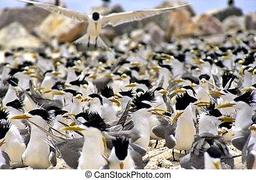 muitos, pássaros