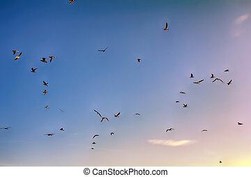 muitos, soaring, pássaros, enquanto, céu azul