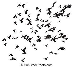 muitos, voando, céu, pássaros