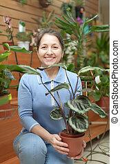 mujer, calathea, tienda, flor, planta