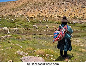 mujer, con, un, lama, multitud, en, los andes, de, perú,...