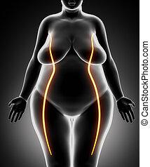 mujer, delgado, líneas, grasa