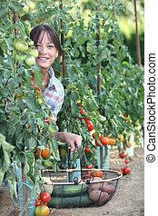 mujer, escoger, tomates frescos, y, otro, vegetales