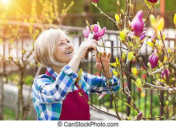 mujer mayor, árbol, magnolia, poda