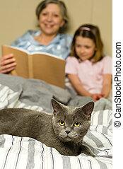 mujer mayor, y, nieta, lectura, con, gato