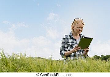 mujer, mirar fijamente, en, tableta, pantalla, en, campo de trigo
