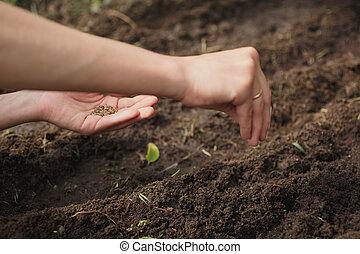 mujer, plantar las semillas, en el jardín