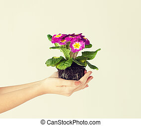 mujer, tierra, flor, manos de valor en cartera