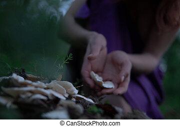 mujer, tocón, hongos, bosque, manos, misterioso, blanco, crepúsculo