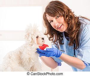mujer, veterinario, con, un, perro