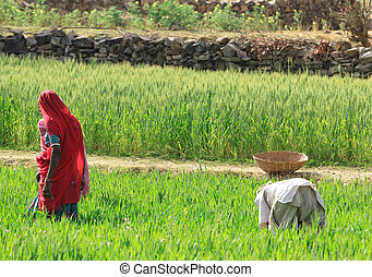 mujeres, agricultura