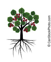 Mulberry tree with roots illustration