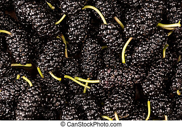 Mulberry Background