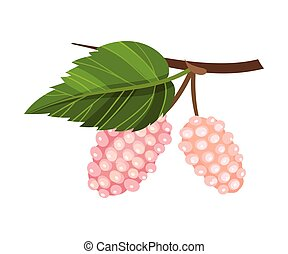 Mulberry Branch with Immature Pink Berries Vector Illustration. Multiple Long Fruit with Sweet Flavor