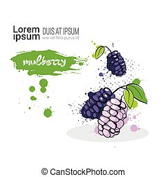 Mulberry Hand Drawn Watercolor Fruit On White Background...