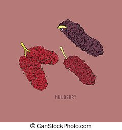 Mulberry sketch vector illustration.