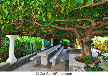 Mulberry tree - Rest sitting area under the mulberry tree (...