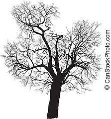 Vector silhouette of a deciduous tree, mulberry